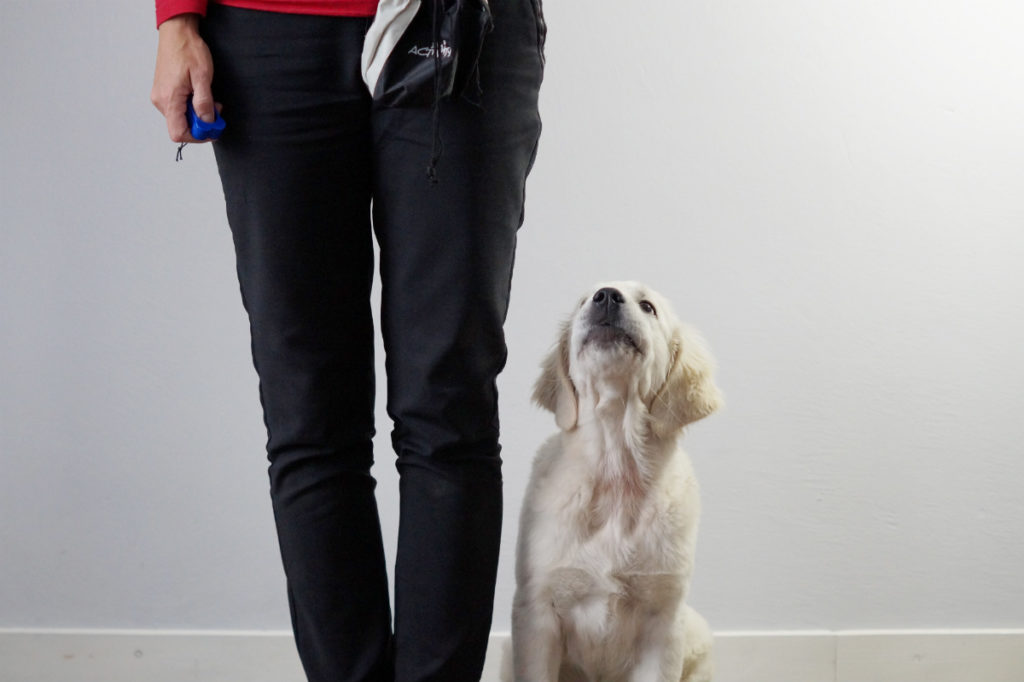 Podstawowe komendy dla psa