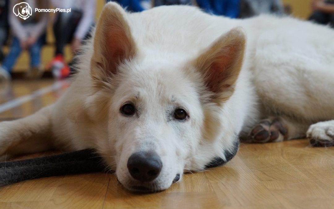 Zajęcia edukacyjne z psem w SP. nr 2 w Kętach